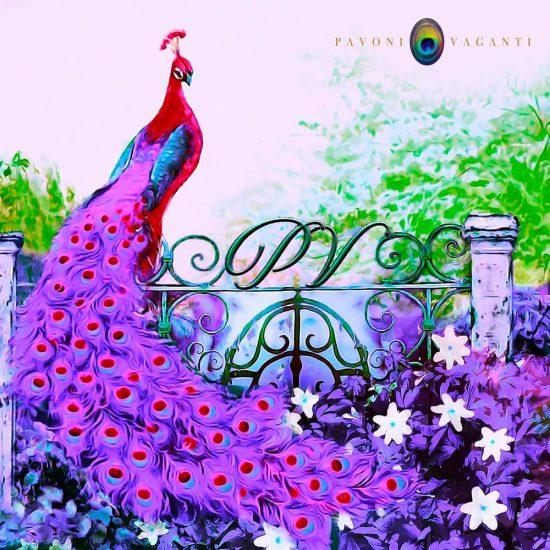 carres-pavoni-vaganti-deep-chic-pink