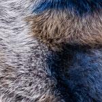 Fox Warm Grey
